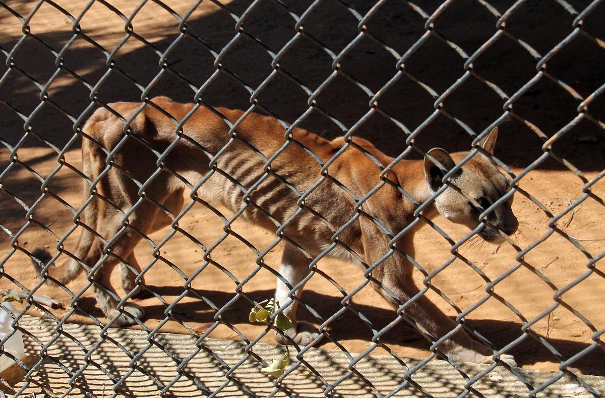 Fotos de animales en zoologicos 70