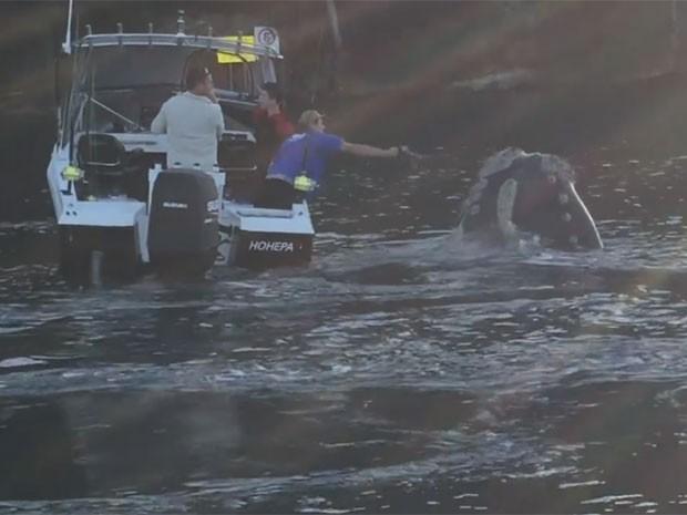 Em vídeo, pescador flagra exato momento em que lixo é retirado da baleia (Foto: Reprodução/Facebook/Ron Kovac)
