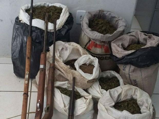 Maconha e semente da droga foi apreendida em ilhas do São Francisco, MG (Foto: Divulgação Polícia MIlitar)