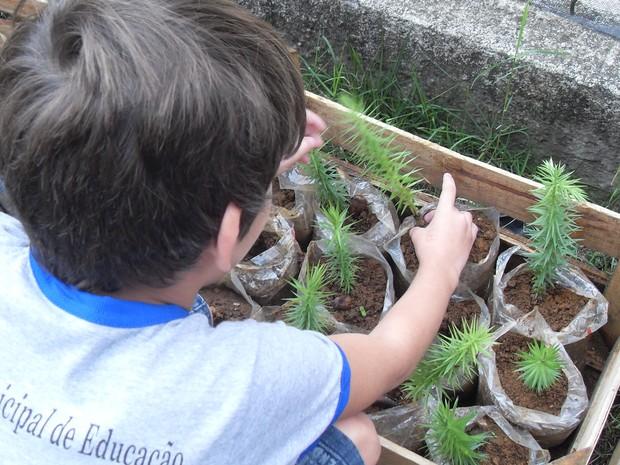 As crianças cultivam as mudas até chegarem no tamanho de plantio definitivo (Foto: Divulgação)