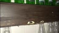 Tiroteio em Todos os Santos deixa apartamento de família crivado de balas