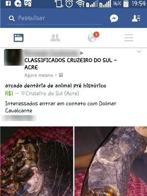 Comercialização é proibida por lei, diz doutor em paleontologia  (Foto: Reprodução/Facebook)
