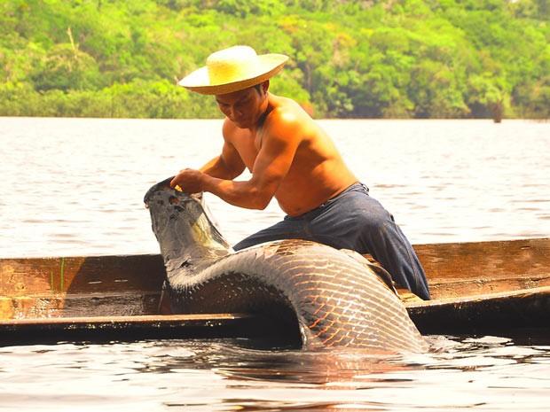 Pescador captura exemplar de pirarucu em lago da Amazônia. Espécie pode pesar até 250 kg e medir três metros (Foto: Divulgação/Jimmy Christian)