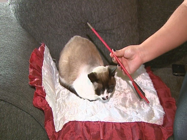 Flecha que acertou o gato tem 30 centímetros de comprimento (Foto: Reginaldo dos Santos/EPTV Central)