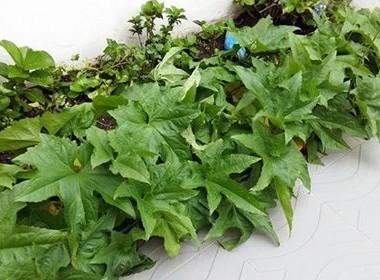 planta-aroma-gr (Foto: Andréa Braz )