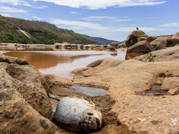 Peixes morrem com lama presente no Rio Doce (Foto: Carlos Dório Costa/ Arquivo Pessoal)