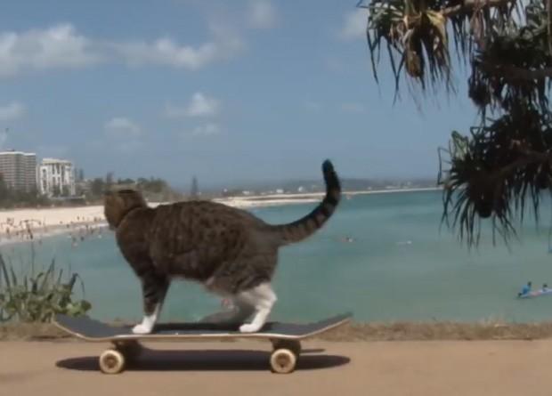 O gato 'Didga' foi filmado andando pelas ruas da Austrália com seu 'inseparável companheiro' Ollie, o skate (Foto: Reprodução/YouTube/CATMANTOO)