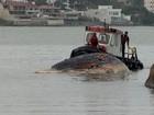 Carcaça de baleia é retirada de praia e enterrada em Vila Velha, ES