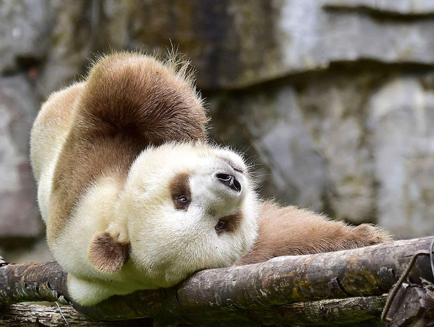 (Foto: Bored Panda)