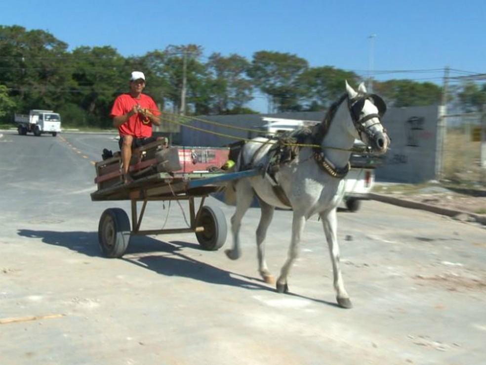 Texto quer eliminar maus tratos aos animais utilizados nos veículos  (Foto: Reprodução/ TV Gazeta)
