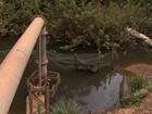 Estiagem faz agricultores reduzirem a irrigação em propriedades no DF