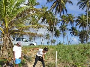 Objetivo é evitar que os animais entrem em contato com a lama (Foto: Divulgação/ Projeto Tamar)