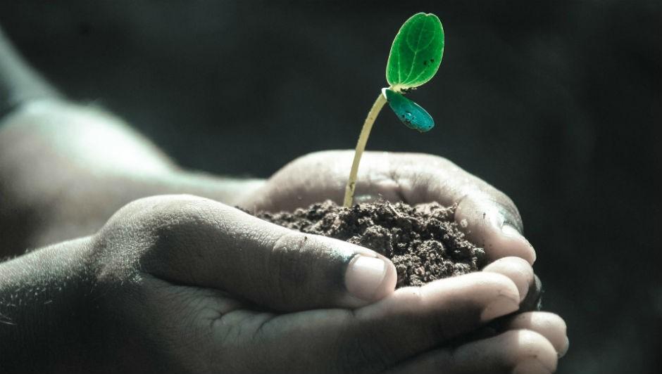 Pode ser bastante simples tornar a sua empresa amiga do meio-ambiente (Foto: Pexels)