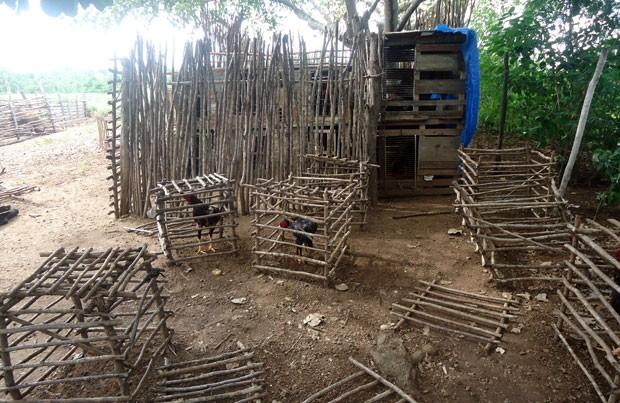 Rinha funcionava no quintal de uma casa no distrito de Umari, em Ielmo Marinho (Foto: João Maria Rodrigues)