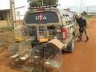 Polícia ambiental do DF apreende aves silvestres mantidas em cativeiro