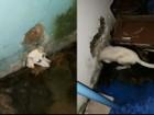 Cachorro é resgatado após ficar com a cabeça presa em buraco na parede