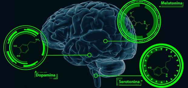 Cérebro com Dopamina, Serotonina e Mielina assinaladas (Foto: GE)