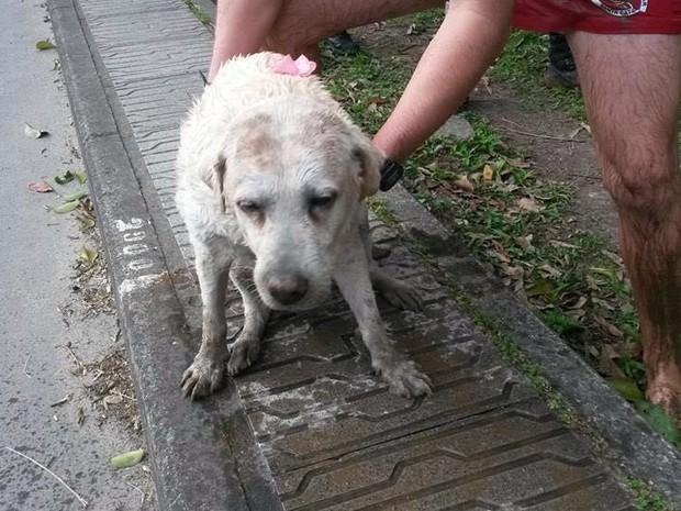 Cadelinha resgatada tinha lacinho e não aparentava ser de rua (Foto: Gabriel Felipe/RBSTV)