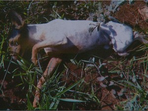 Doente, cão foi abandonado em terreno baldio em Cravinhos (Foto: Maurício Glauco/EPTV)