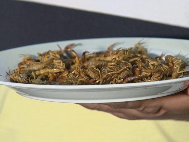 Escorpiões encontrados em casa na região noroeste paulista (Foto: Reprodução/TV TEM)