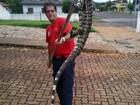 Lagarto gigante é encontrado em supermercado de Quedas do Iguaçu
