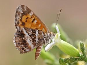 img_4992 Livro Borboletas no Vale do Catimbau cataloga mais de 135 espécies em PE Curiosidades Notícias