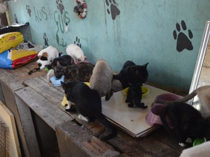 Cães e gatos foram resgatados durante incêndio em Macapá (Foto: John Pacheco/G1)