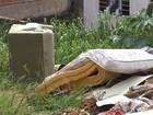 Terrenos  abandonados são propícios para criação do mosquito da dengue