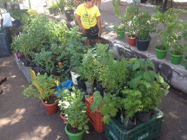 Plantas com propriedades medicinais estão entre as mais vendidas (Foto: John Pacheco/G1)