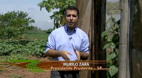 Murilo Zara apresentou a matéria exibida no Globo Rural (Foto: Reprodução/TV Fronteira)