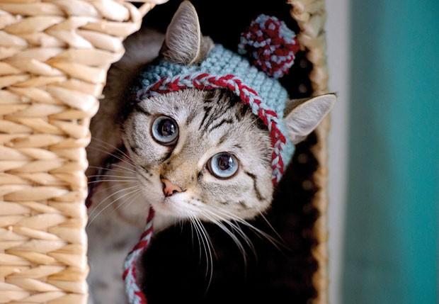 Livro traz 30 modelos de chapéus de tricô e crochê para felinos (Foto: Liz Coleman/Running Press/Quarto/AP)