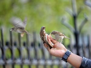 O homem que em Paris é atração por dar comida aos pássaros pelo olhar de Fábio Brandão (Foto: Divulgação Exposição 'Quatro Olhares')