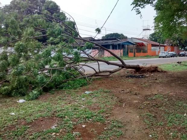 Árvores da Avenida Sete de Setembro não resistiu ao temporal (Foto: Jonatas Boni/ G1)