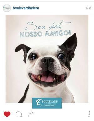 Shopping divulga nas redes sociais que cães são bem-vindos.  (Foto: Reprodução/ Instagram )