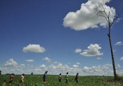 fazenda_sustentavel_area_indigena (Foto: Marcello Casal Jr./Abr)
