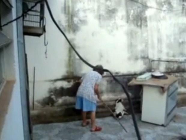 Idosa agride cadela a pauladas em Cordeirópolis (Foto: Reprodução/EPTV)
