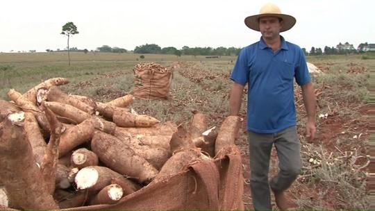 Intercâmbio entre Japão e Paraná pode melhorar produção de mandioca