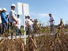 'Dia de Campo' vai incentivar a produção de soja em Sergipe