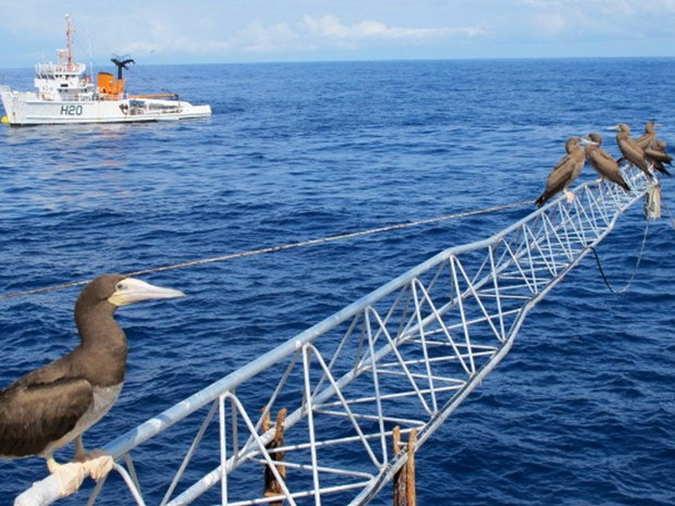Marégrafo utilizado pelo Inpe para medir a oscilação do nível dos oceanos repleto de aves atobás (Foto: Eduardo Carvalho / Globo Natureza)