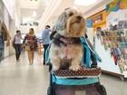 De olho nos negócios, shoppings de Belém abrem as portas para animais