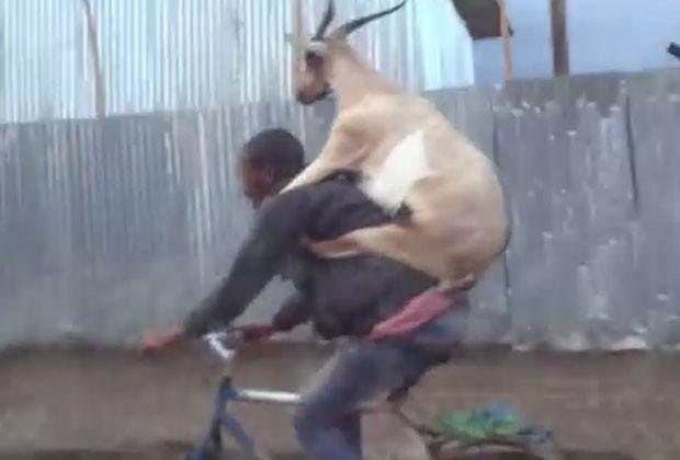 Cabra pegou 'carona' nas costas do dono durante passeio de bicicleta na Etiópia (Foto: Reprodução/YouTube/NunoSa)
