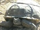 As tartarugas do deserto que obrigaram a Marinha dos EUA a mudar seus planos