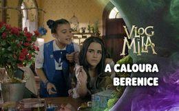 A caloura Berenice