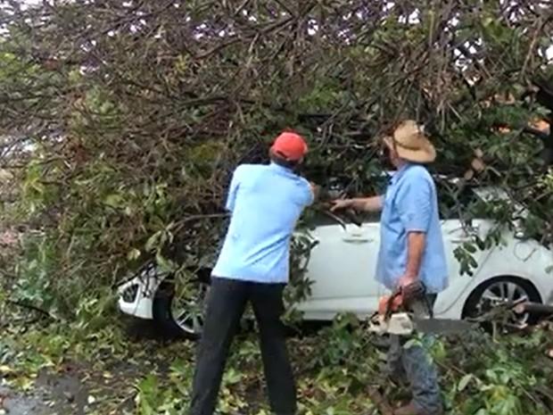 Mãe e filha ficaram presas dentro do carro após queda de árvore durante temporal (Foto: Adilson Morais/TV Rádio Show)