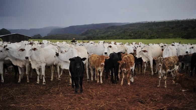 boi-nelore-gordo-pecuaria-corte-carne (Foto: Ernesto de Souza/Ed. Globo)