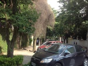 Algumas árvores podem manchar a pintura do seu carro (Foto: Denis Marum/G1)