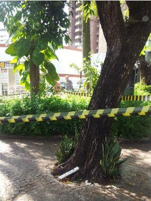 Explosivo encostado em uma árvore em frente ao supermercado (Foto: Luciano Calafiori/G1 Campinas)