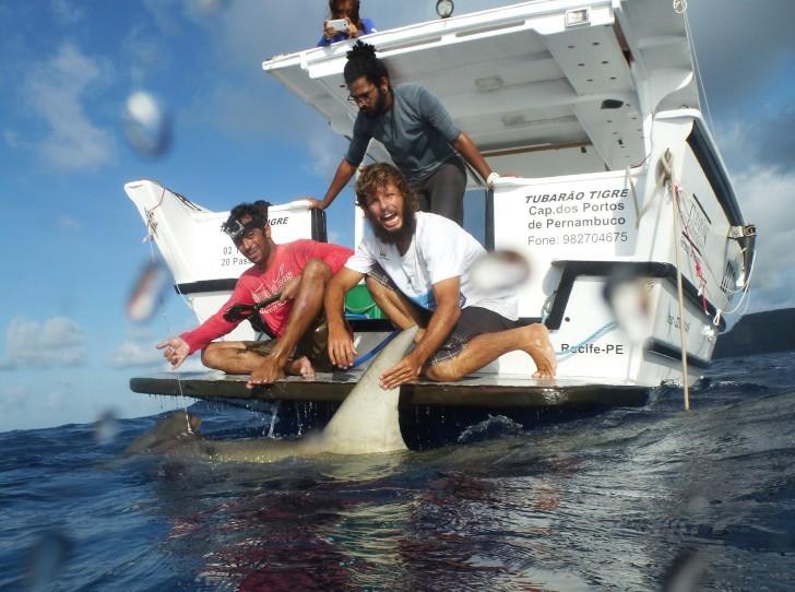 Tubarão tigre noronha