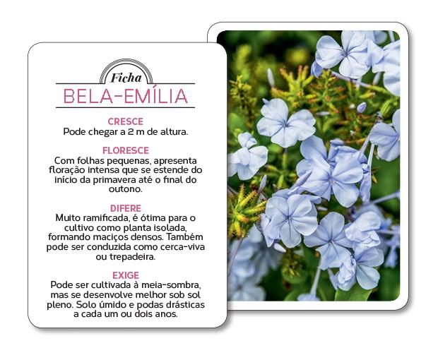 Bela-emília - Seleção natural (Foto: Edu Castello/Editora Globo)