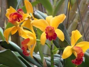 """""""Cultivo de orquídeas"""" é uma das oficinas de meio ambiente oferecidas pelo Sesc Sorocaba em novembro  (Foto: Divulgação/ Sesc Sorocaba)"""